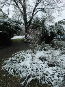 winterlandschap in zuid Frankrijk