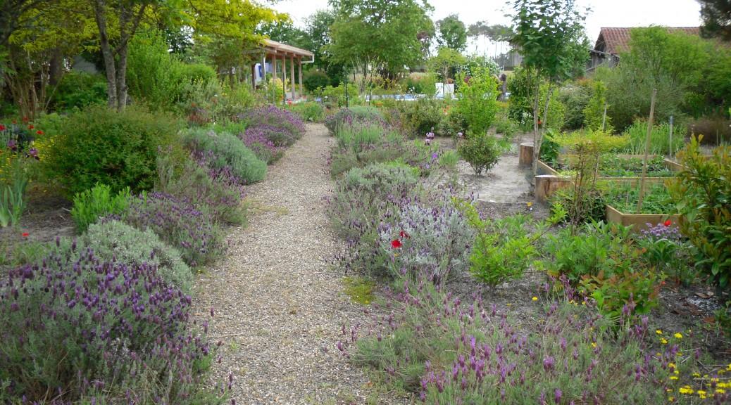 tuinpad, omzoomd met bloeiende lavendel